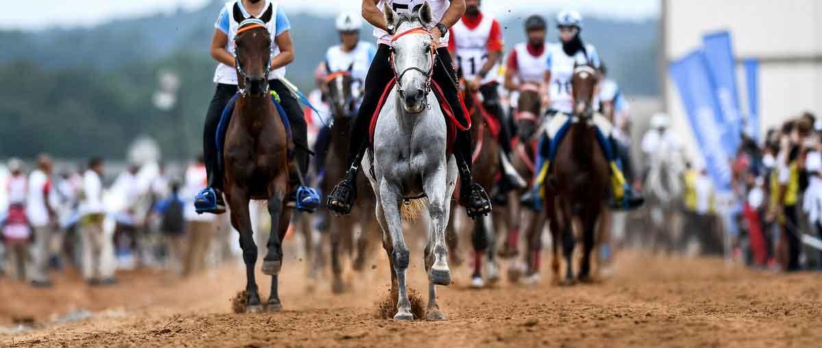 Sport y Equitación (@equitacionvalve)   Twitter
