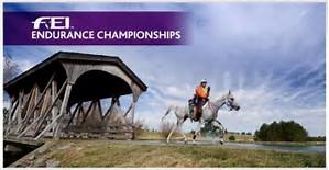 fei endurance forum