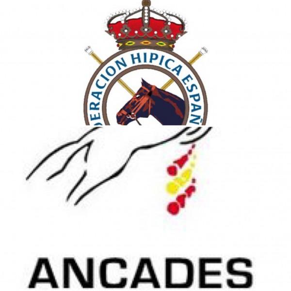 Resumen de acuerdos ANCADES - RFHE para la temporada 2019. Criterios de actuación